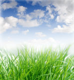 Spring Grass On A Sunny Day Royalty Free Stock Image
