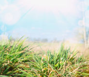 Spring grass over sky and field, blurred background Stock Photo