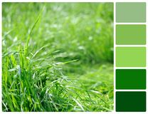 Spring grass with palette color swatches Stock Photography