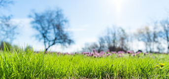 Spring grass in park Royalty Free Stock Photos