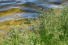 Spring grass on the river Bank royalty free stock photos