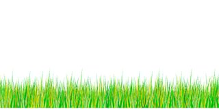 Spring grass seamless pattern. Easter decoration with spring grass and meadow flowers. Isolated on white background. Vector