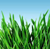 Spring grass and sky Royalty Free Stock Images