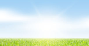 Spring grass and sky Royalty Free Stock Photo