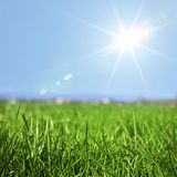 Spring grass in sun light Royalty Free Stock Image