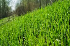 Spring  grass in sun light and defocused sky on background Stock Photography