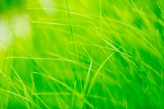 Spring grass in sun light. Spring green grass in sun light Royalty Free Stock Image