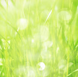 Spring grass with sunlight Stock Photos
