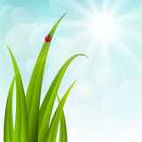 Spring grass on sunny background Royalty Free Stock Photo
