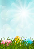 Spring grass on sunny background Stock Image