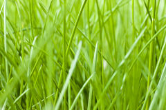 Spring grass texture Royalty Free Stock Photos