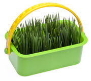Spring Grass in a Vibrant Green Basket Royalty Free Stock Images