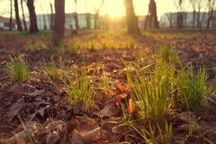 Spring grass, in the warm light of the setting sun tone Royalty Free Stock Photos