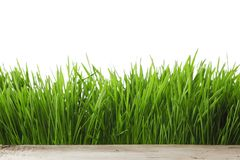 Spring grass on white Stock Photography