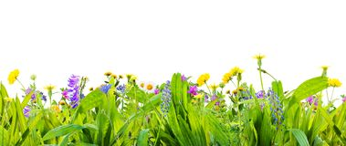 A spring grass and wild flowers isolated on white background stock images