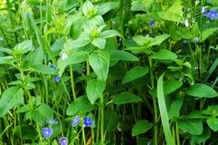 Spring grass Stock Image