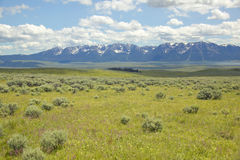 Spring grasslands and flowers in Centennial Valley near Lakeview, MT Royalty Free Stock Photos