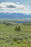 Spring grasslands and flowers in Centennial Valley near Lakeview, MT Stock Photo
