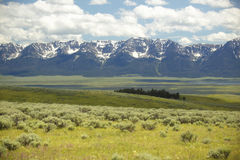 Spring grasslands and flowers in Centennial Valley near Lakeview, MT Royalty Free Stock Photo