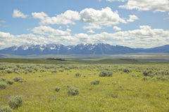 Spring grasslands and flowers in Centennial Valley near Lakeview, MT Stock Photography