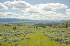 Spring grasslands and flowers in Centennial Valley near Lakeview, MT Stock Images