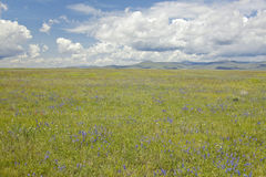 Spring grasslands and mountains in Centennial Valley near Lakeview, MT Royalty Free Stock Photography