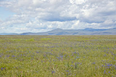 Spring grasslands and mountains in Centennial Valley near Lakeview, MT Stock Photos