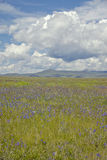 Spring grasslands and mountains in Centennial Valley near Lakeview, MT Royalty Free Stock Image