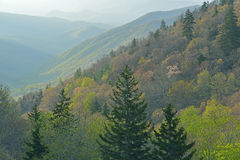 Spring Great Smoky Mountains Royalty Free Stock Images