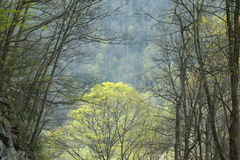 Spring, Great Smoky Mountains National Park, TN Stock Image