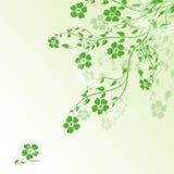 Spring Green Stock Image