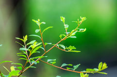 Spring green Royalty Free Stock Photo