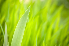 Spring green background Royalty Free Stock Photo