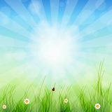 Spring green background. Grass and sun Royalty Free Stock Photography