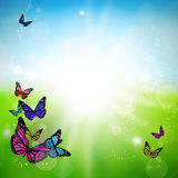 Spring green background with colorful butterflies. Spring green background with light and colorful butterflies royalty free illustration