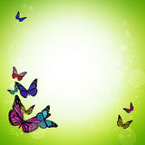 Spring green background with colorful butterflies Stock Photo