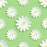 Spring green background seamless pattern with chamomile Stock Photography