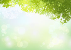 Spring Green background with soft sunlight Stock Photography