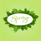 Spring green background. Spring white circle frame with green different leaves and flowers on light green background stock illustration