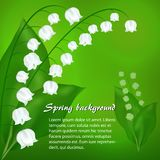 Spring background with flowers lily of the valley. Spring green background with white flowers lily of the valley Royalty Free Stock Photos