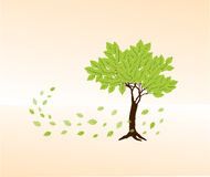 Spring green beech  tree Stock Image