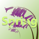 Spring green card with violet meadow flower Royalty Free Stock Images