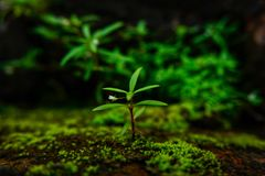 Spring of the green corner royalty free stock photos