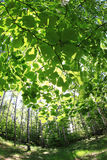 Spring green czech forest Royalty Free Stock Images