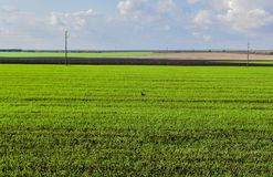 Spring green endless fields near the village of Srebarna which is 15 km away. west of the district town of Silistra, on the wester stock photos