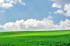 Spring green field and blue sky Royalty Free Stock Images