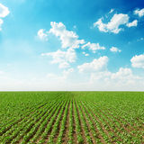 Spring green field and blue sky with clouds Stock Image