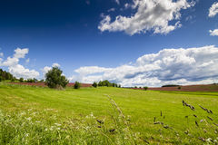 Spring Green Field with Fresh Grass and Blue Sky. With Clouds. Easter Time Landscape Royalty Free Stock Images
