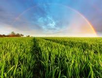 Spring Green field Stock Photo