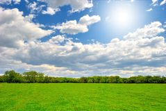 Spring green field with sun. Spring green field under blue cloudy sky with sun Royalty Free Stock Image